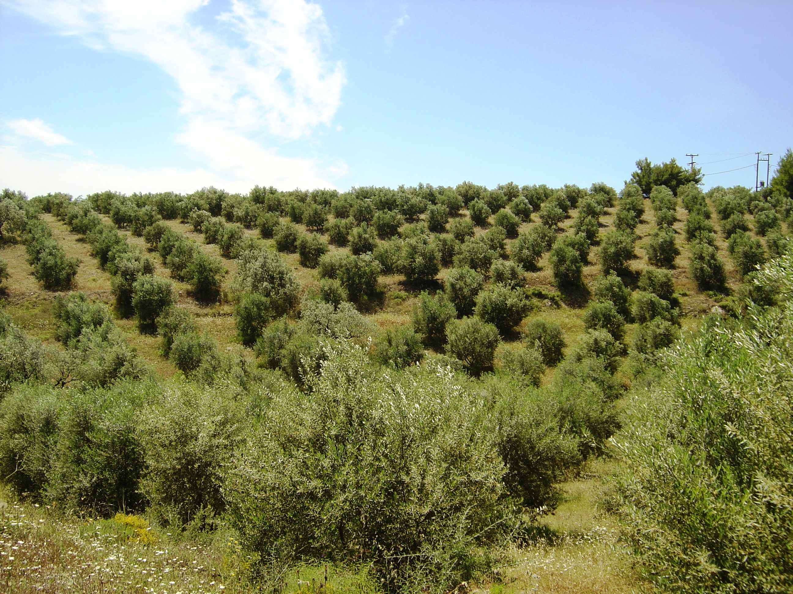 Produktionsprozess - olive-co.at | olive-co.at