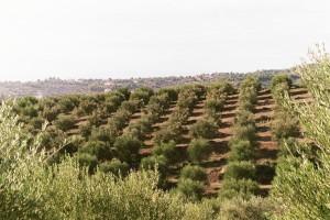 Gleicher Abstand und mittlere Baumgröße haben einen großen Einfluss auf die Qualität.