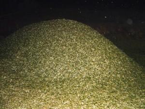 Ansammlung der Olivenblätter hinter der Ölmühle