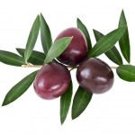 AUTHENTIKON unter den TOP-Olivenölen bei Verkostung von staatlich geprüften Olivenölverkostern!